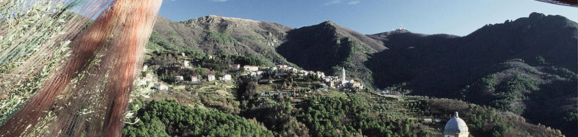 Zona Omogenea - Petronio - Banner